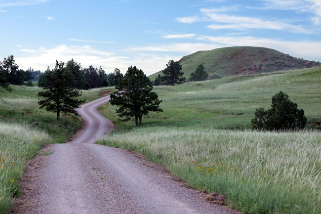 a gravel road meandering through the prairie dotted with a few pine trees
