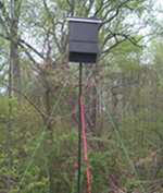 Bat box in the park