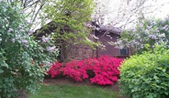 Azaleas and lilacs in springtime bloom beside the Ranger Station at Wolf Trap.