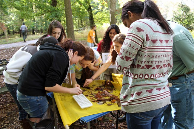 High school volunteers conduct a wildlife study at Wolf Trap National Park for the Performing Arts.
