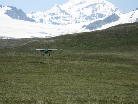 Landing on the Wrangell Plateau