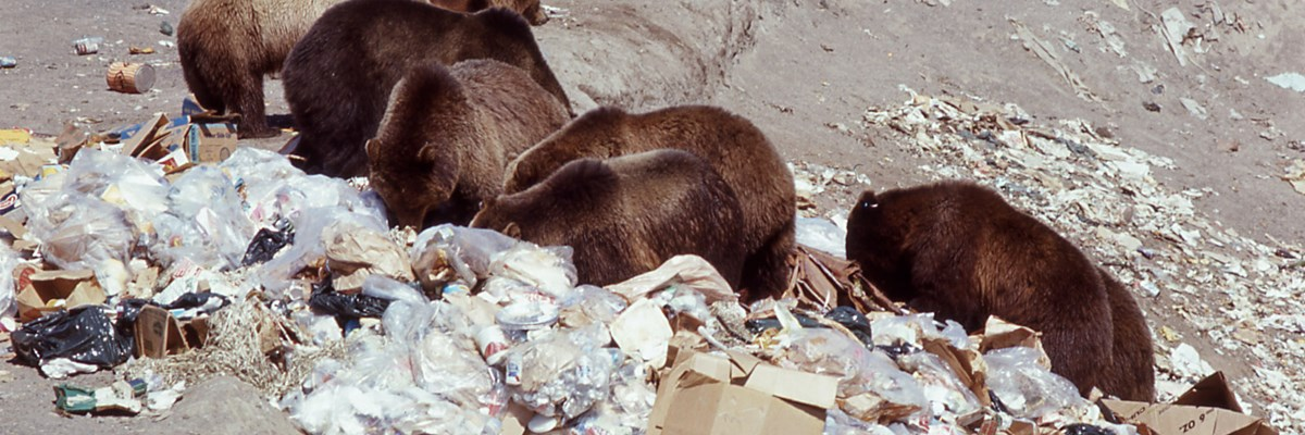 Recycling and Waste Diversion - Yellowstone National Park