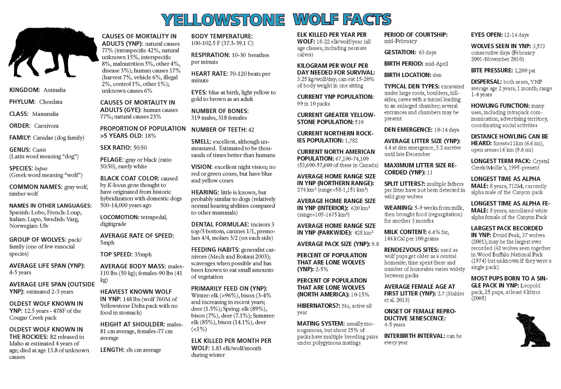 Ys 24 1 Yellowstone Wolf Facts Yellowstone National Park Us