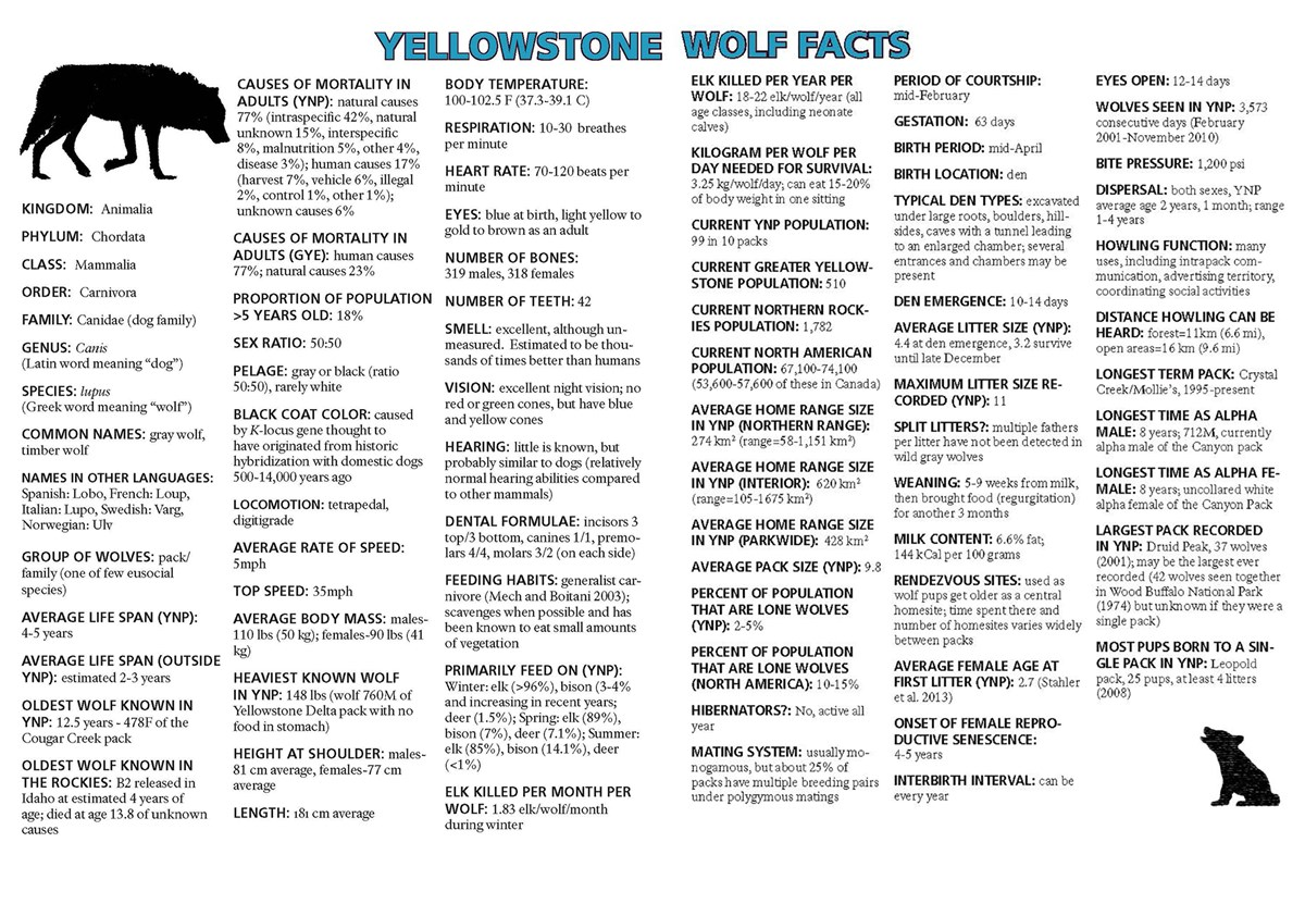 Yellowstone Wolf Facts