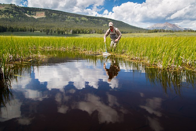 A researcher looks for amphibians on a beautiful summer day.