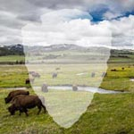 The shape of an arrowhead over a picture of bison in a valley