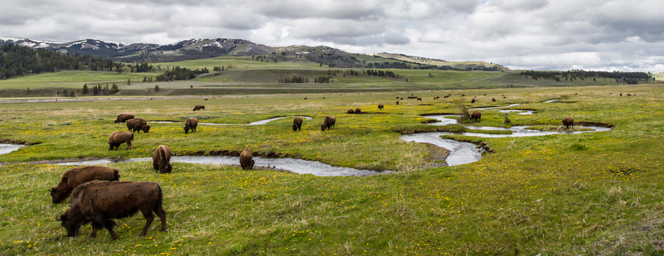 National Park Service Centennial Yellowstone National Park Us