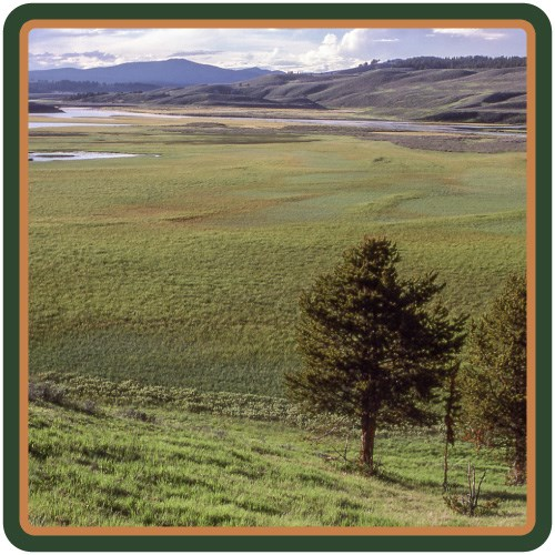 The Yellowstone River meanders through the grassy, open valley.
