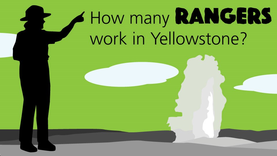 "Silhouette of a ranger standing near an erupting geyser on a green background with the word ""How many rangers work in Yellowstone?"""