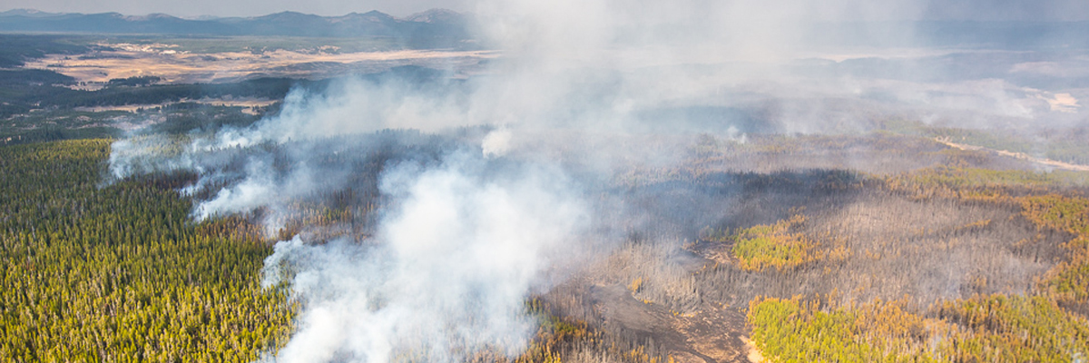 Aerial photo of smoke rising from green forest with patches of blackened areas