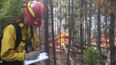 Person in fire-fighting gear monitoring a fire burning at the base of some pine trees.