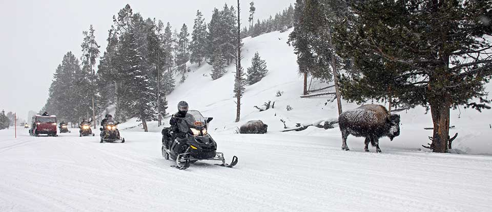 Snowmobiles, coach, & bison in a winter landscape.