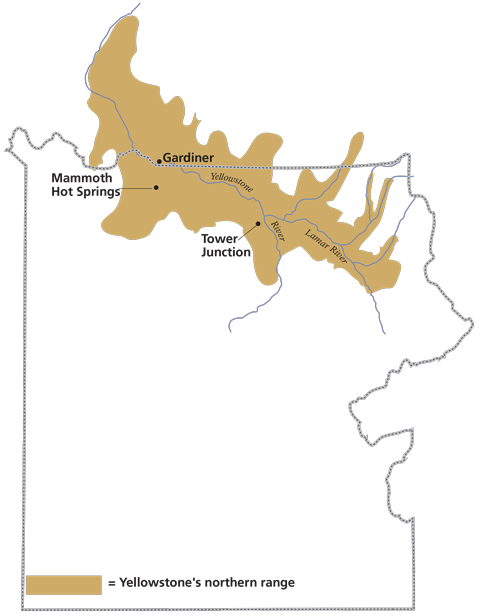 Boundary of Yellowstone national Park with area surrounding Yellowstone and Lamar Rivers marked as Yellowstone's northern range inside and outside of boundary