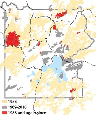 Burned areas in Yellowstone from 1988 to 2018. Until 2016, the large fires of the 2000s were burning in areas largely unaffected by the 1988 fires. In 2016 alone, 42,425 acres burned in 1988 fire scars.