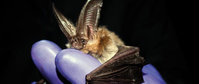 A bat held by a gloved hand