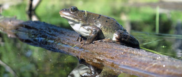 A frog on a log
