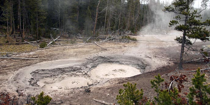 Steam from large mudpots rises in a forest