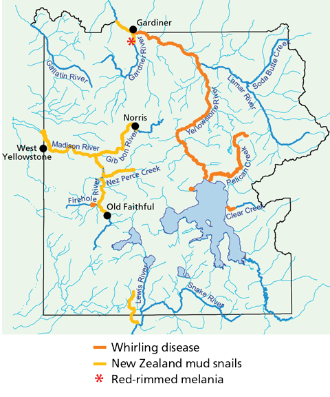 Map of Yellowstone's boundary, rivers, and lakes, with locations of whirling disease, New Zealand mud snails, and red-rimmed melania