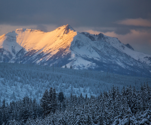 Orange sunlight illuminates the side of a snow-covered mountain peak above a snow-covered forest