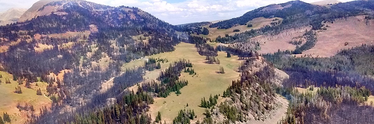 An aerial view of hillsides with green trees, burned and blackened trees, and open spaces in a mosaic