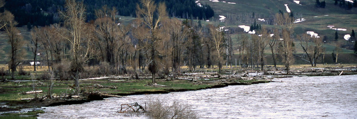 A muddy river cuts into shallow banks