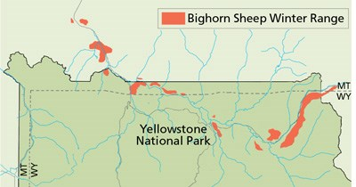 Map showing the winter range of bighorn sheep in the northern part of the park.