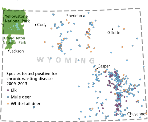 A map of Wyoming with Yellowstone and Grand Teton National parks and locations of animals tested positive for chronic wasting disease