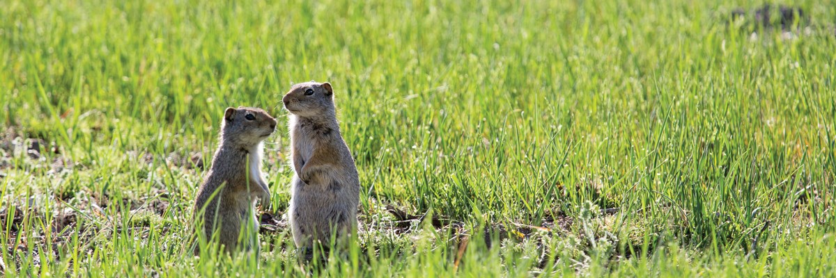 Two squirrels stand in grass