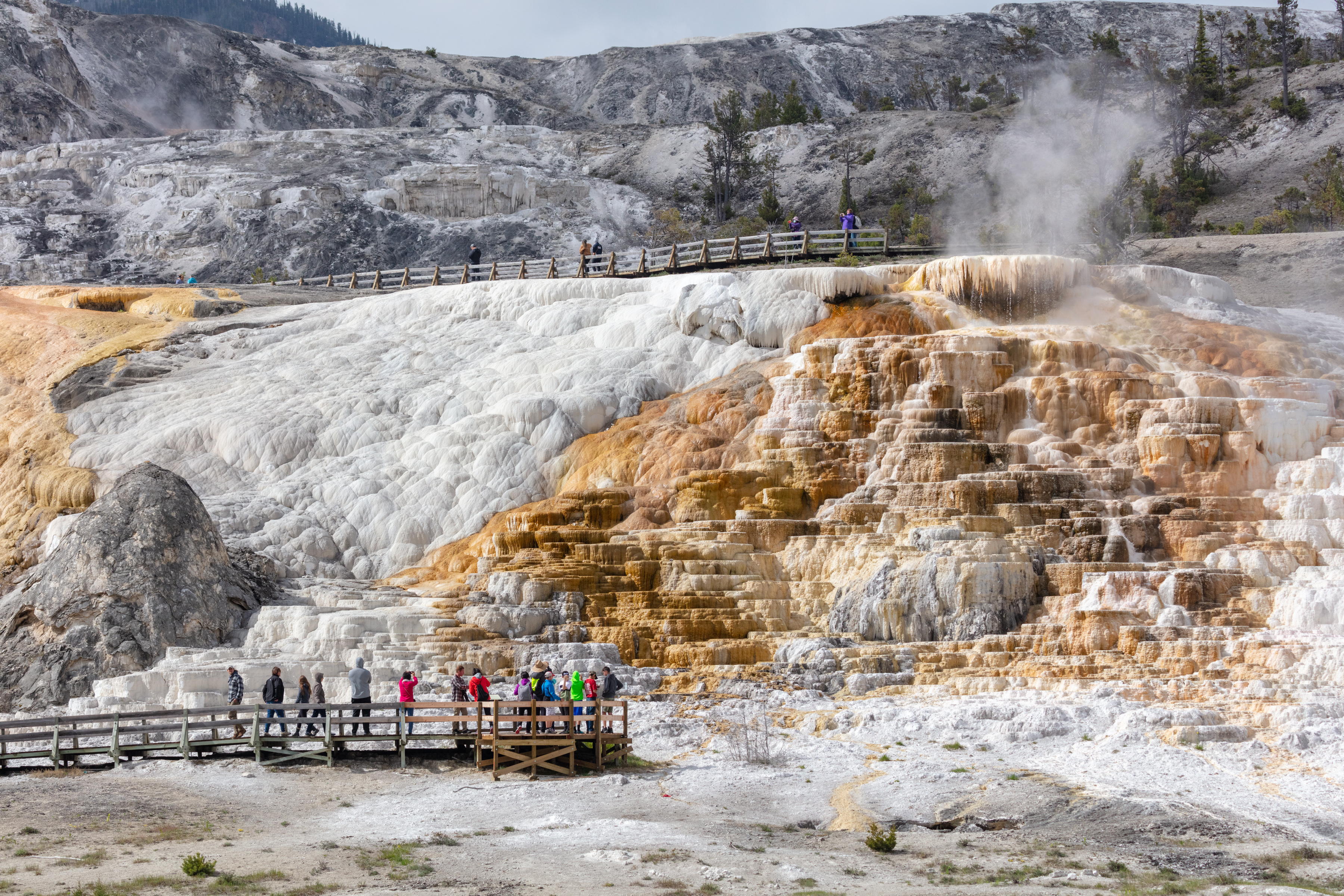 People exploring the Mammoth Hot Spring Boardwalks
