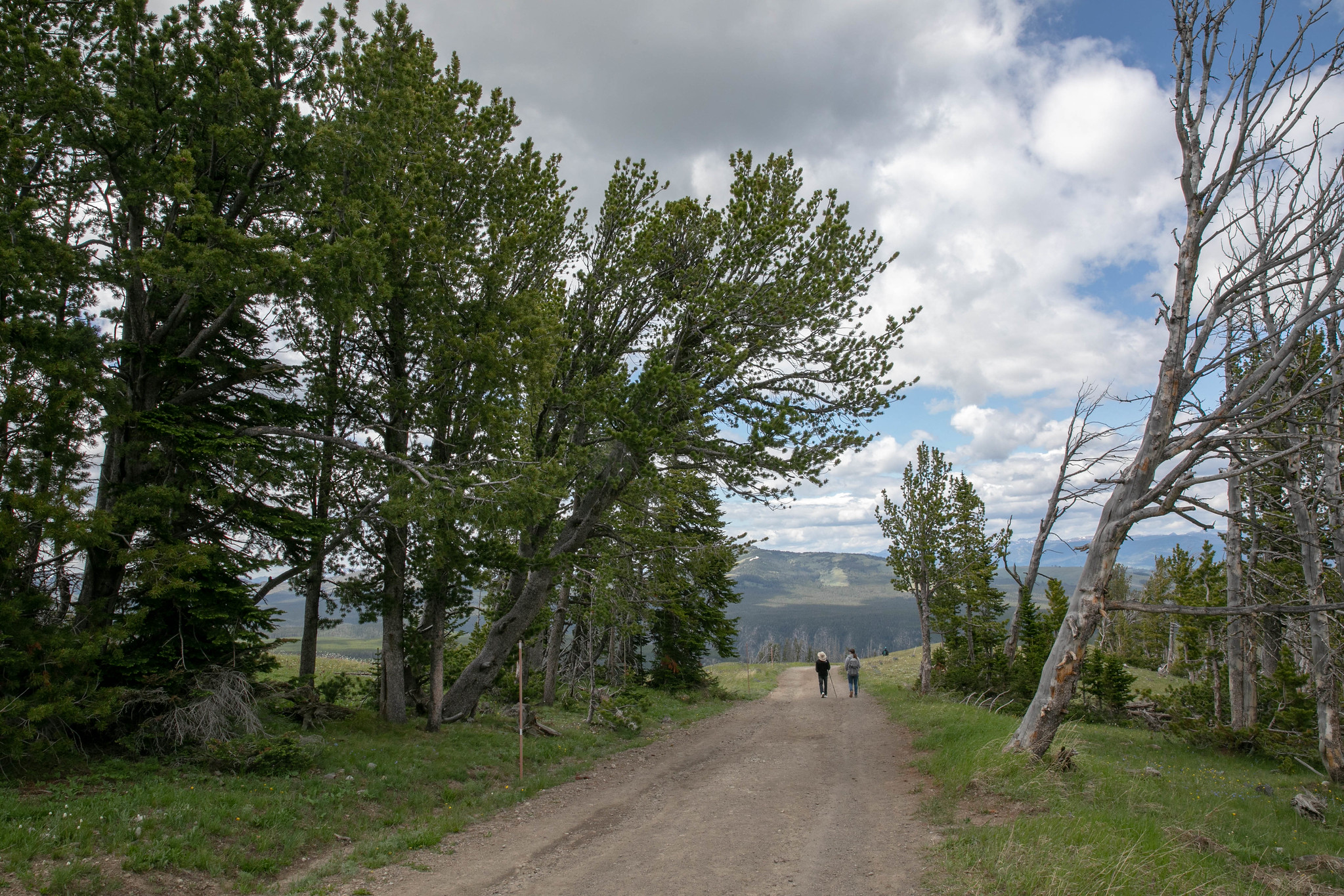 two hikers walking on a narrow dirt road