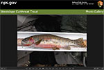 Thumbnail of Fish Identification image.