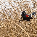 A bird perched on a reed.