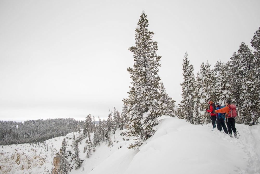 Several skiers stop to admire the Grand Canyon of the Yellowstone from the North Rim Ski Trail.