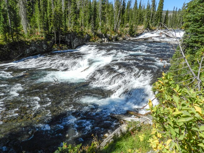 A river cascades down some rapids and through a lush conifer forest.