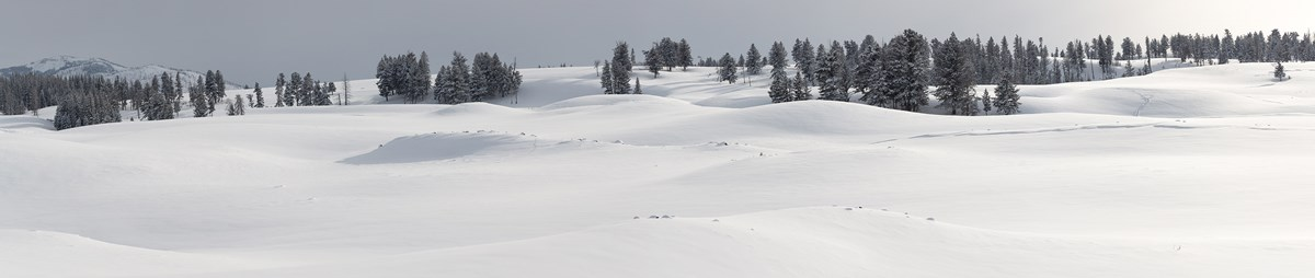 Snow blankets rolling hills while conifer trees grow along the ridge.