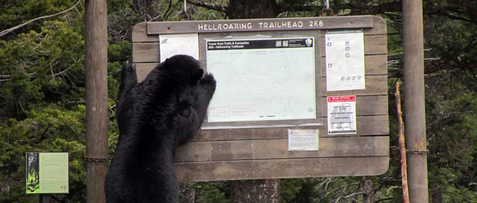 A black bear stands on its hind legs and paws at a trailhead sign