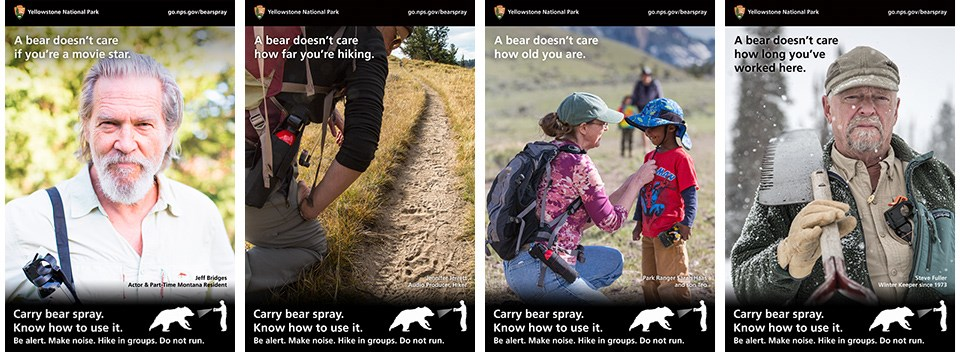 """A Bear Doesn't Care"" campaign posters"