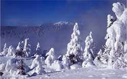 Snow covered trees 3