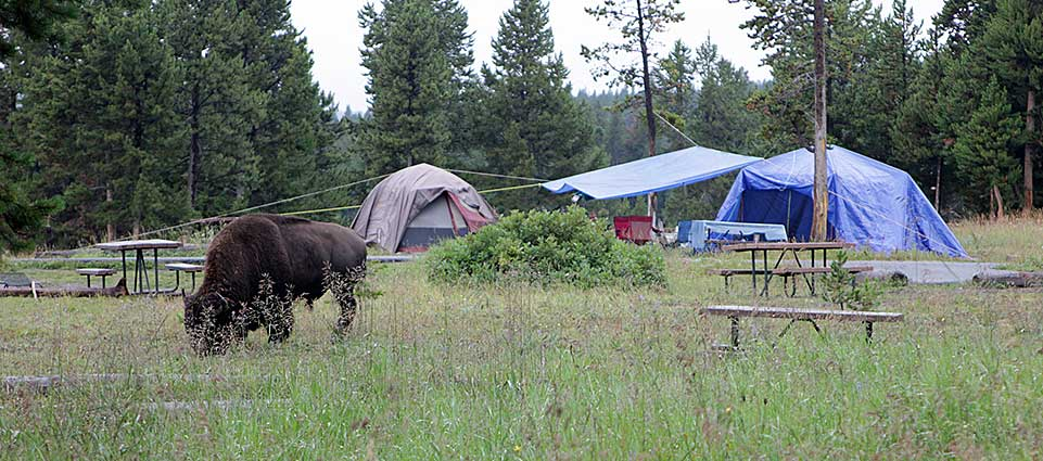 Campgrounds in yellowstone with hookups