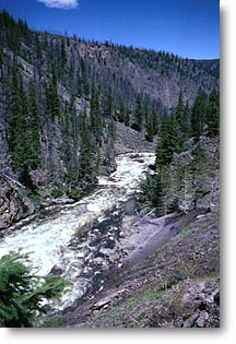 The Firehole River is world famous among anglers for its pristine beauty and healthy brown, brook and rainbow trout.