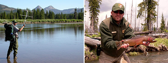 Composite image of park biologist listening for a radio-tagged cutthroat trout  park biologist holding a large cutthroat trout.