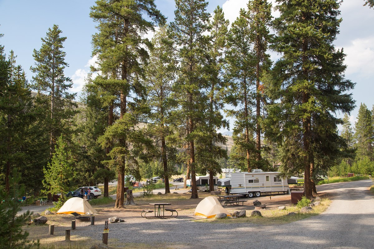 Campsites in the Tower Fall Campground.