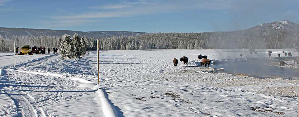 Winter visitors photographing bison.