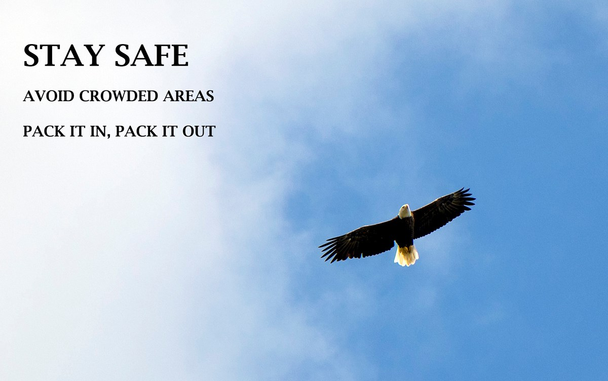 Eagle flying with words stay safe