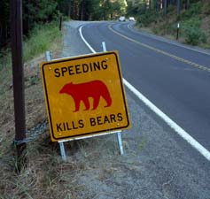 Speeding Kills Bears sign alongside road