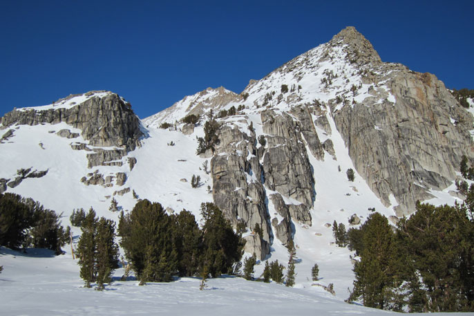 Snowy peaks with whitebark pines in foreground