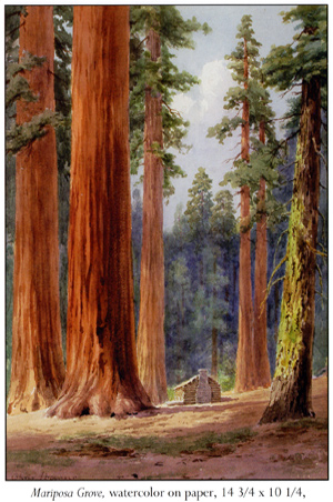 Painting of the Mariposa Grove - watercolor on paper