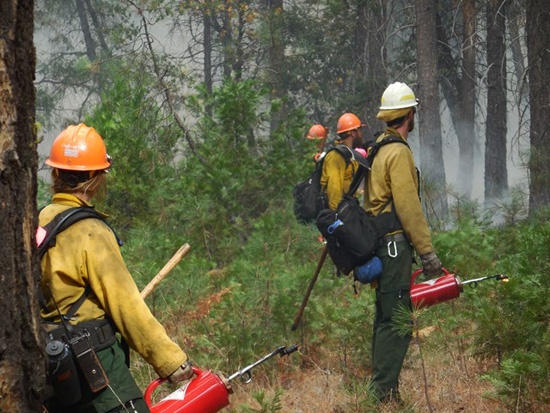 Ignitions begin on Taft Toe Prescribed Burn (firefighters with drip torches)