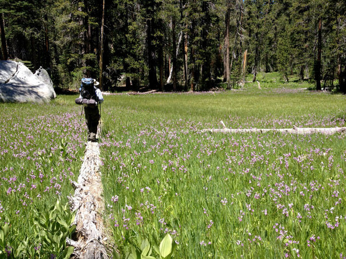 hiker walking on log in wildflower-filled meadow