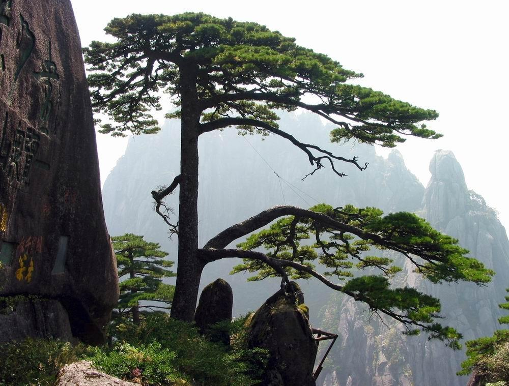 Huangshan National Park in China